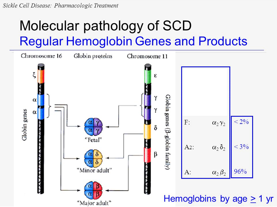 Molecular pathology of SCD Regular Hemoglobin Genes and Products