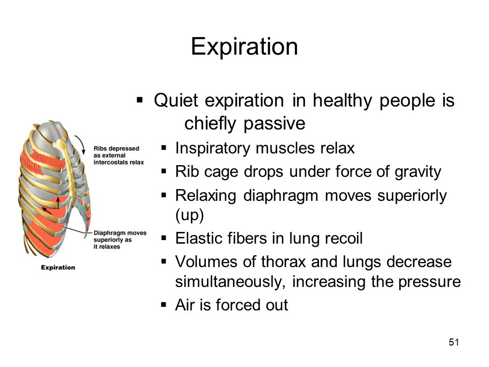 Expiration Quiet expiration in healthy people is chiefly passive