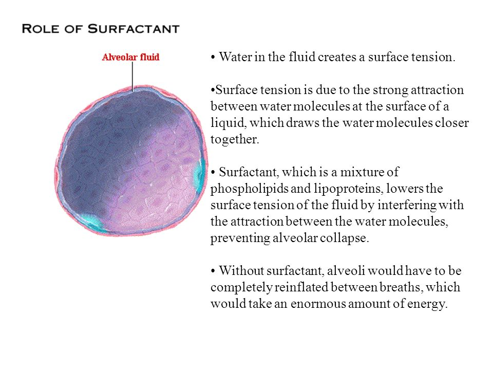 • Water in the fluid creates a surface tension.