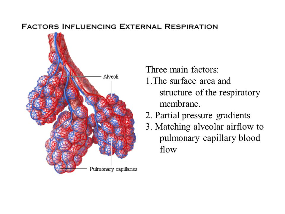 Three main factors: 1.The surface area and structure of the respiratory membrane. 2. Partial pressure gradients.