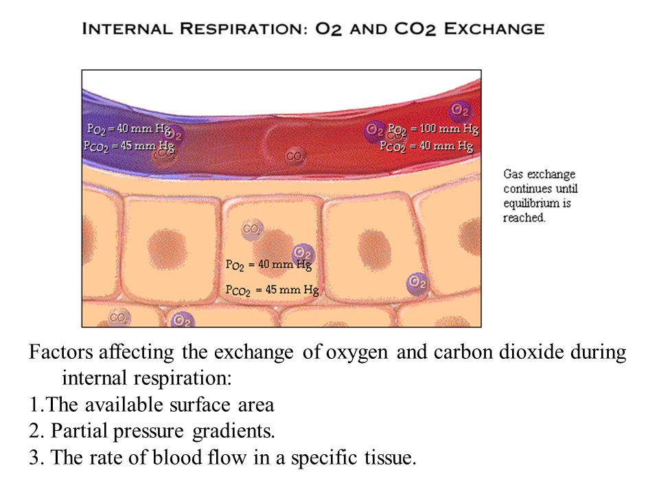 Factors affecting the exchange of oxygen and carbon dioxide during internal respiration: