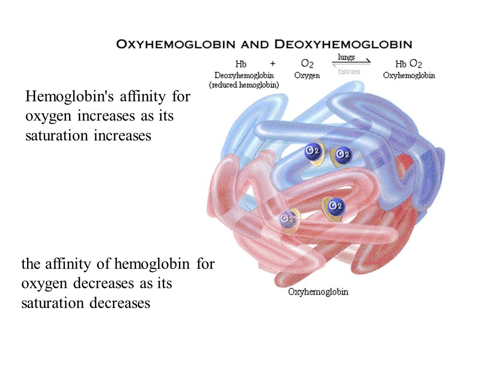 Hemoglobin s affinity for oxygen increases as its saturation increases