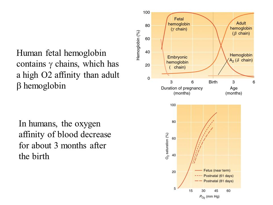 Human fetal hemoglobin contains g chains, which has a high O2 affinity than adult b hemoglobin