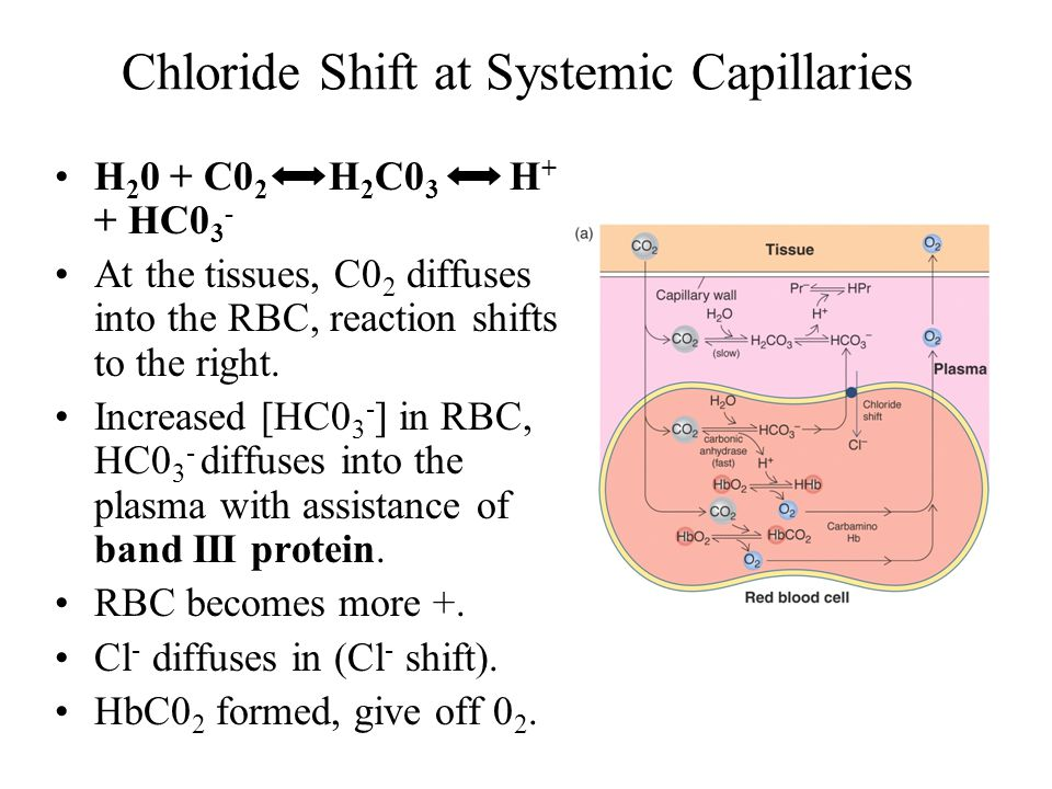 Chloride Shift at Systemic Capillaries