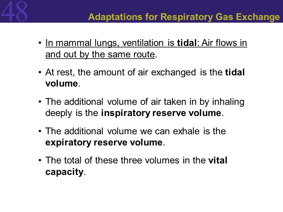 Adaptations for Respiratory Gas Exchange