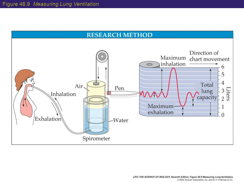 Lung Ventilation System : Physical processes of respiratory gas exchange ppt video