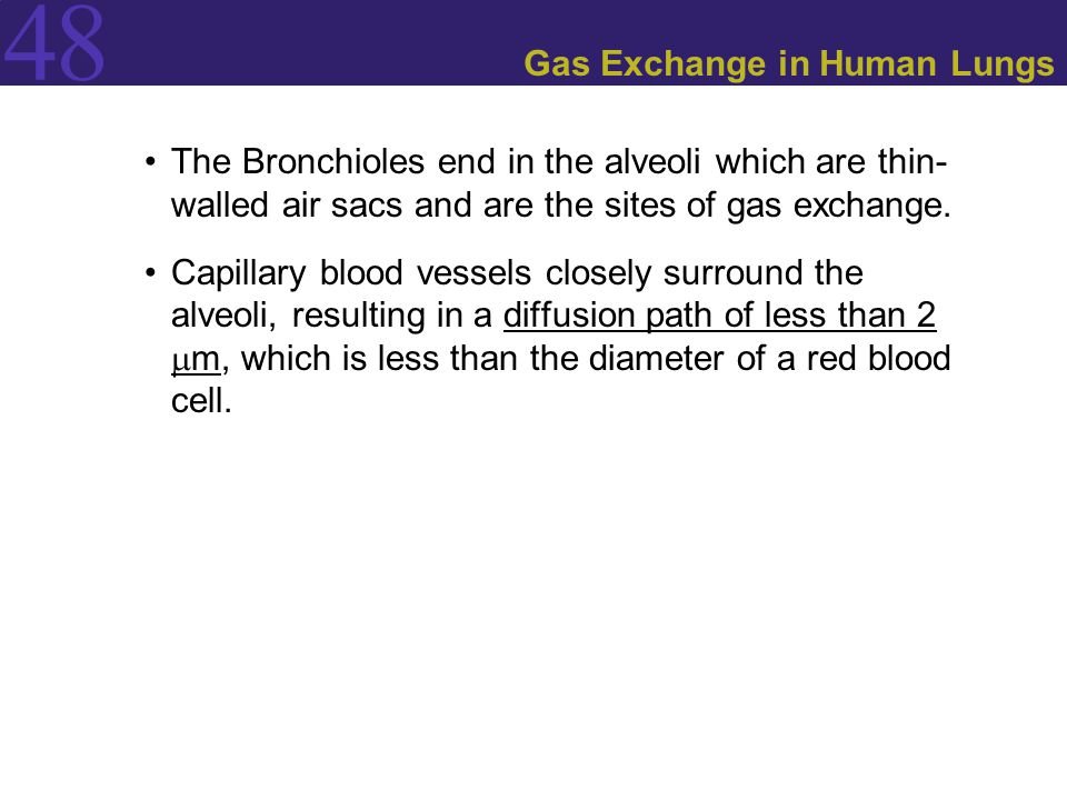 Gas Exchange in Human Lungs