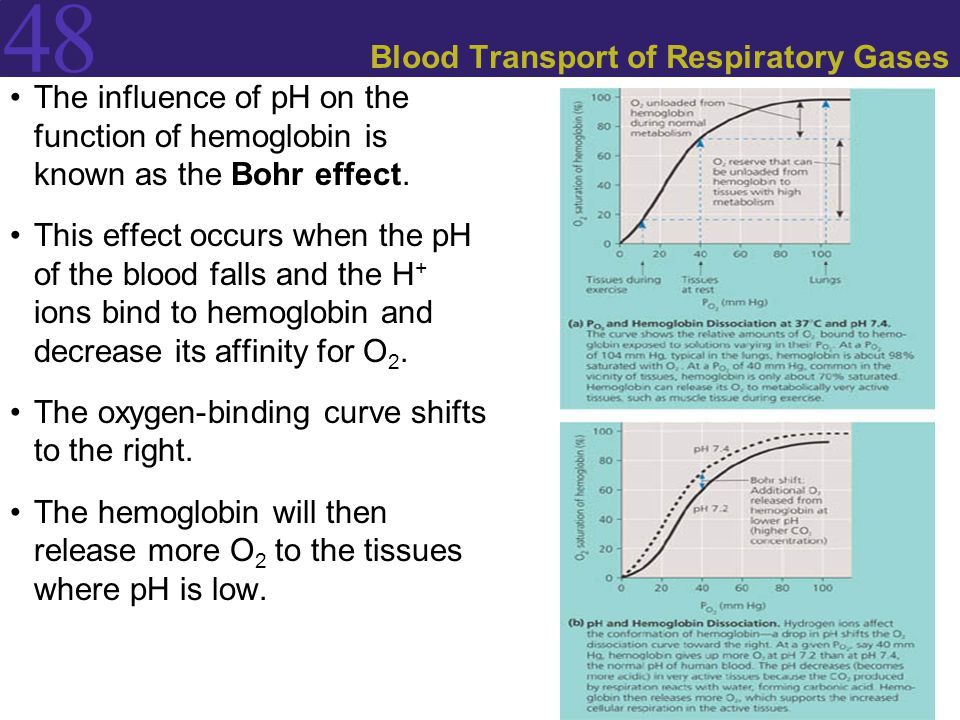 Blood Transport of Respiratory Gases