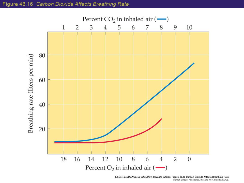 Figure 48.16 Carbon Dioxide Affects Breathing Rate