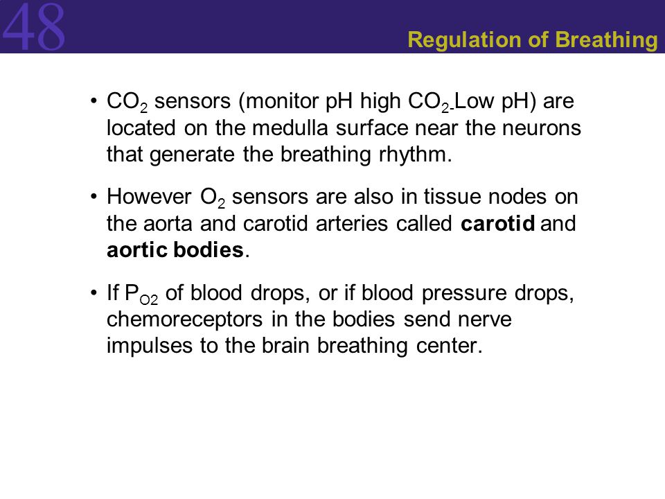 Regulation of Breathing