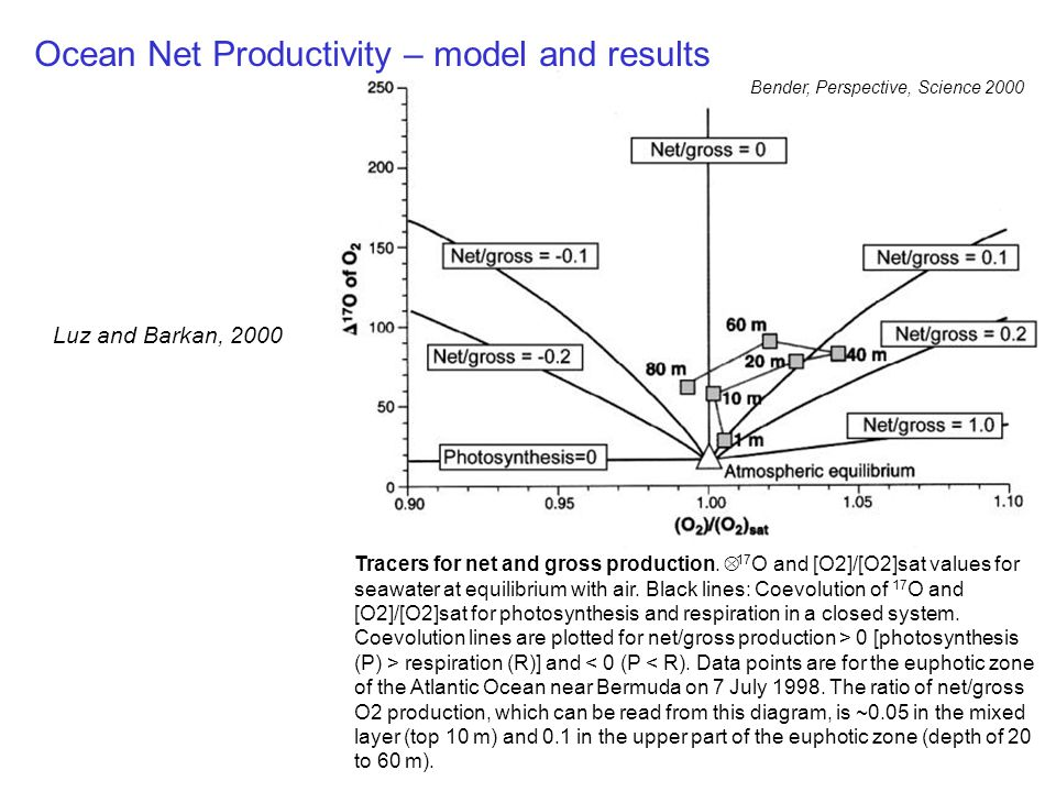 Ocean Net Productivity – model and results