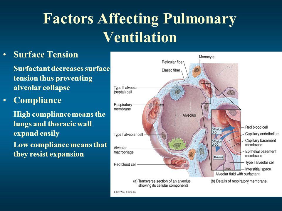 Factors Affecting Pulmonary Ventilation