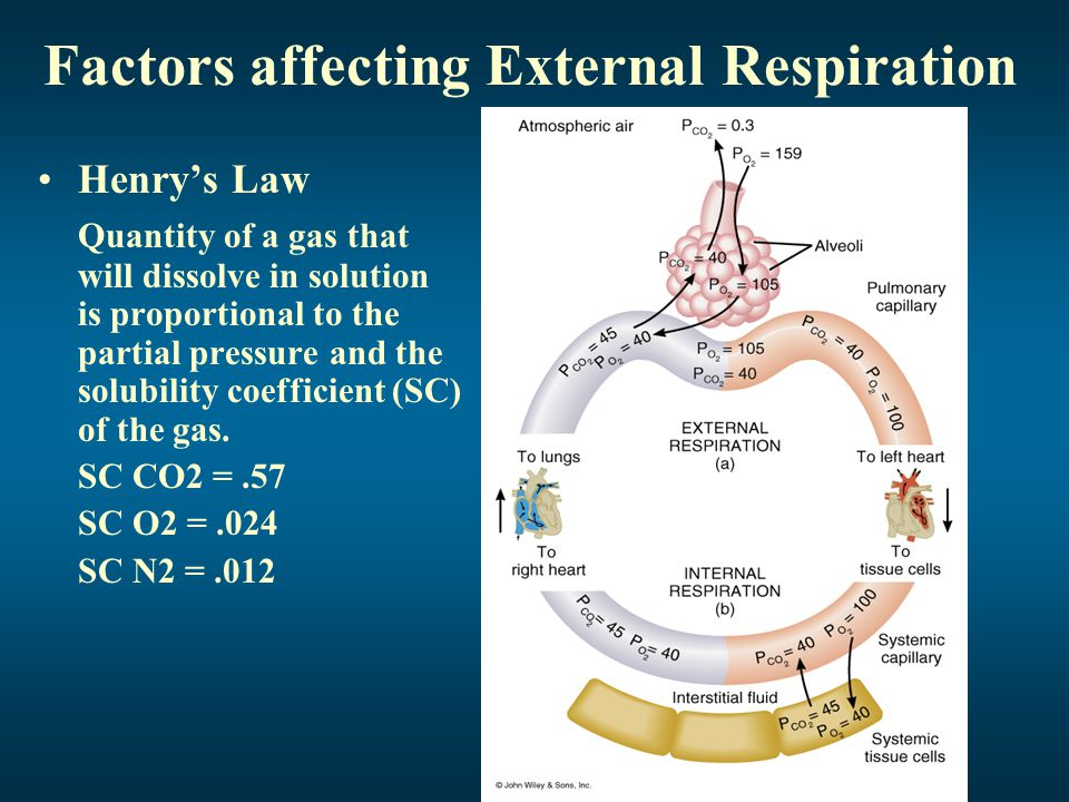 Factors affecting External Respiration