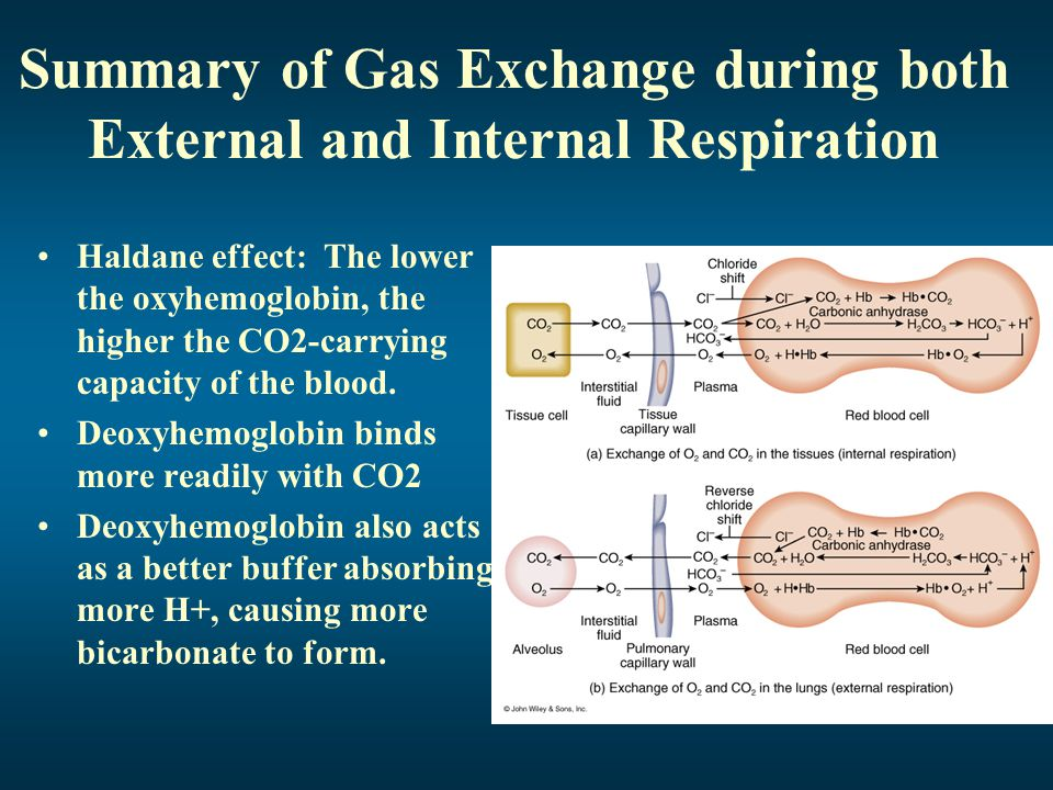 Summary of Gas Exchange during both External and Internal Respiration