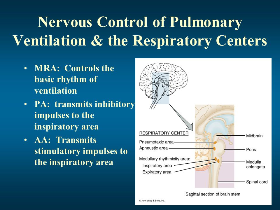 Nervous Control of Pulmonary Ventilation & the Respiratory Centers