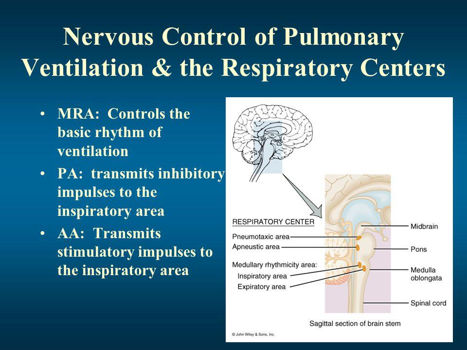 Nervous Control of Pulmonary Ventilation & the Respiratory Centers
