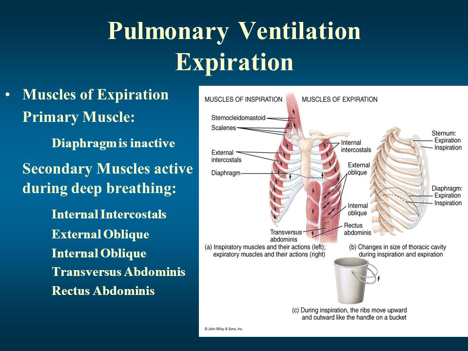 Pulmonary Ventilation Expiration