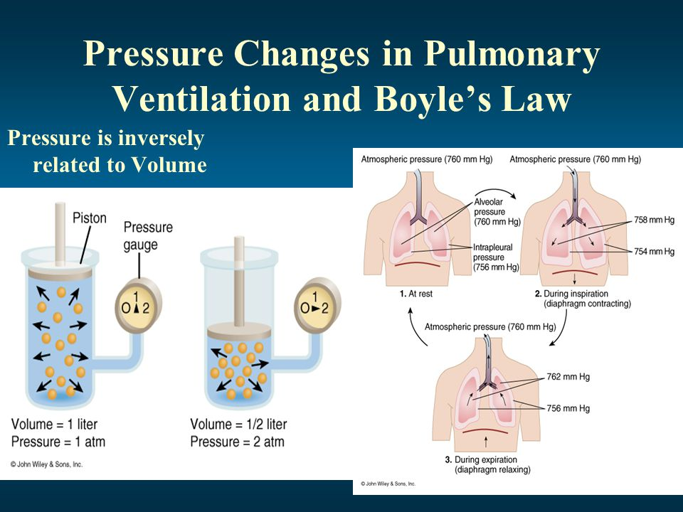 Lung Ventilation System : Processes of the respiratory system ppt video online