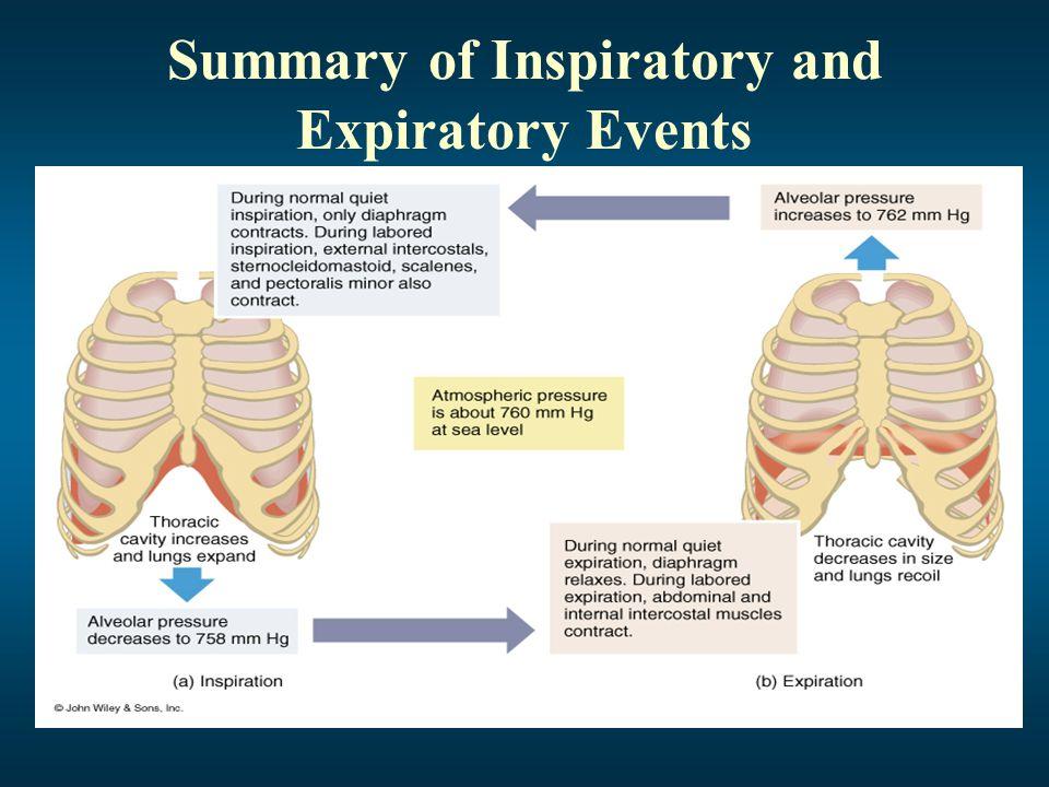 Summary of Inspiratory and Expiratory Events