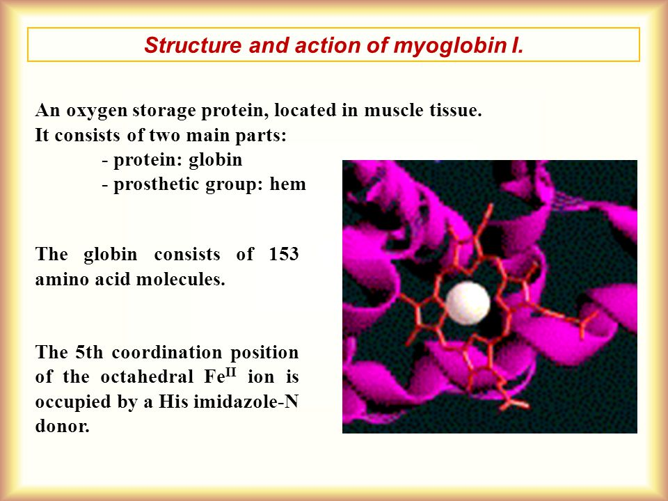 Structure and action of myoglobin I.