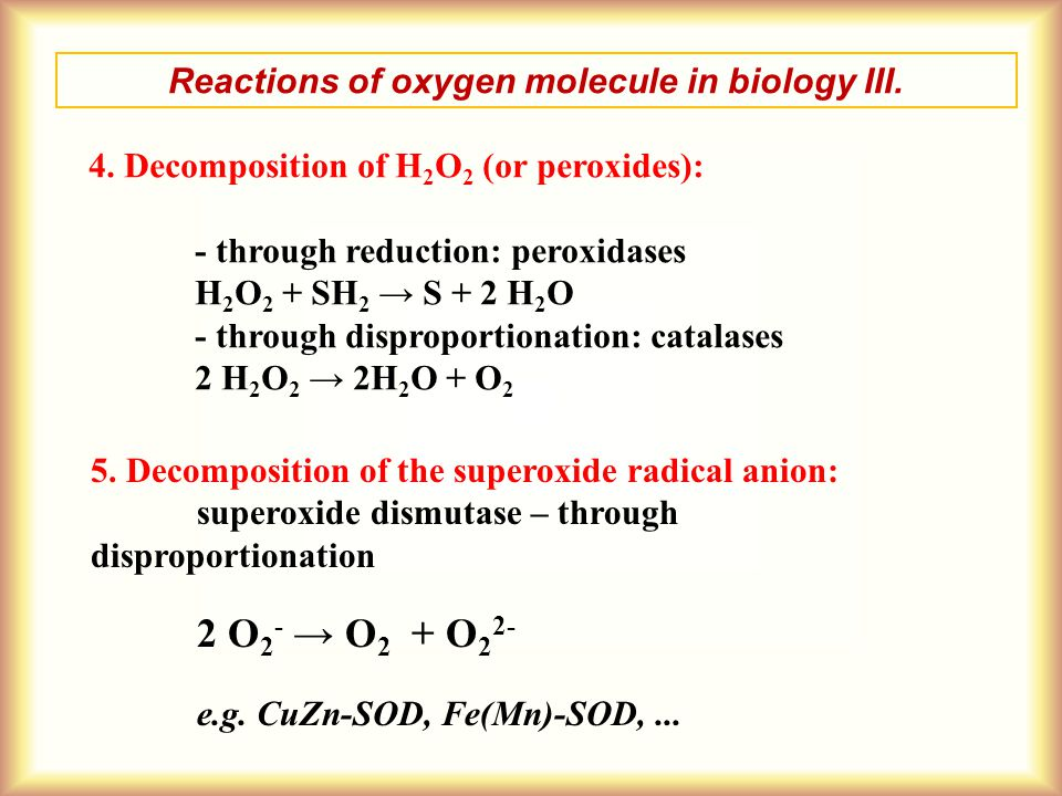Reactions of oxygen molecule in biology III.