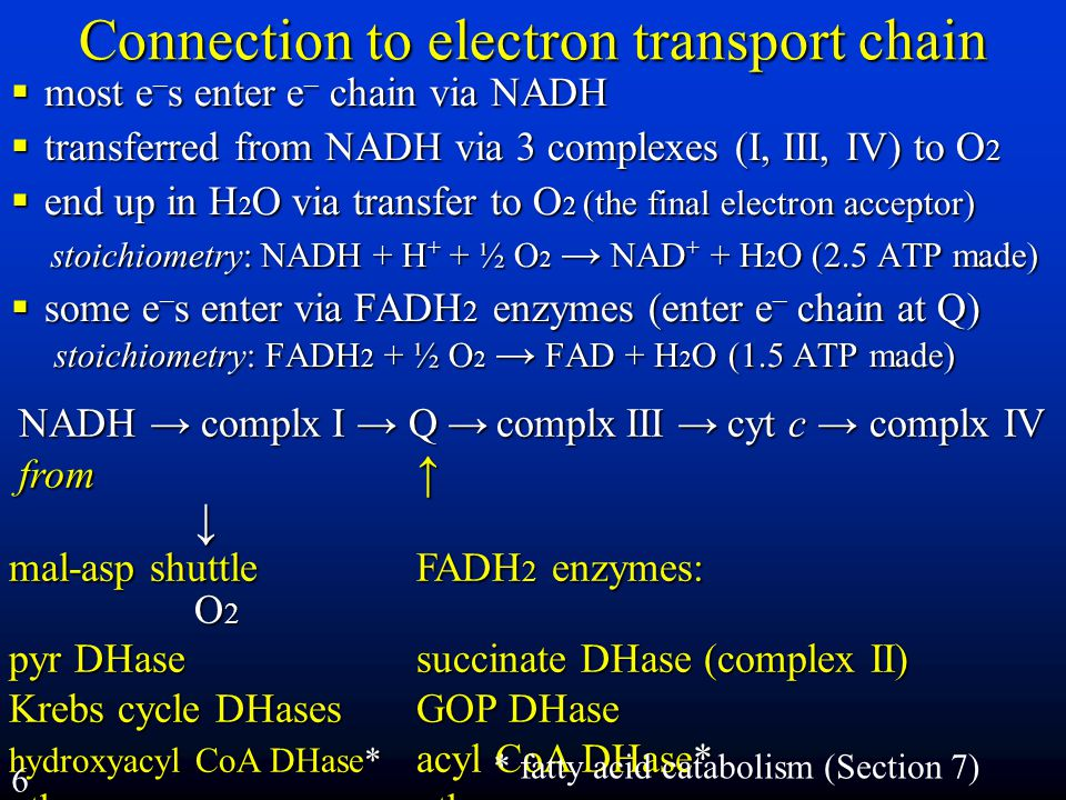 Connection to electron transport chain
