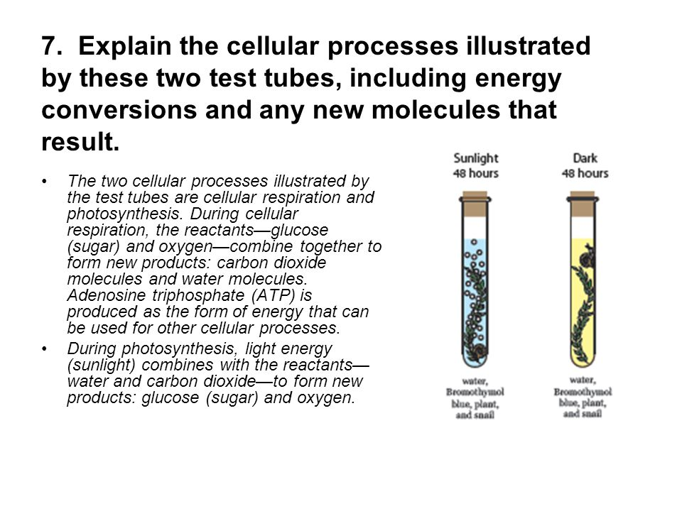 Cell Structure and Function - ppt video online download