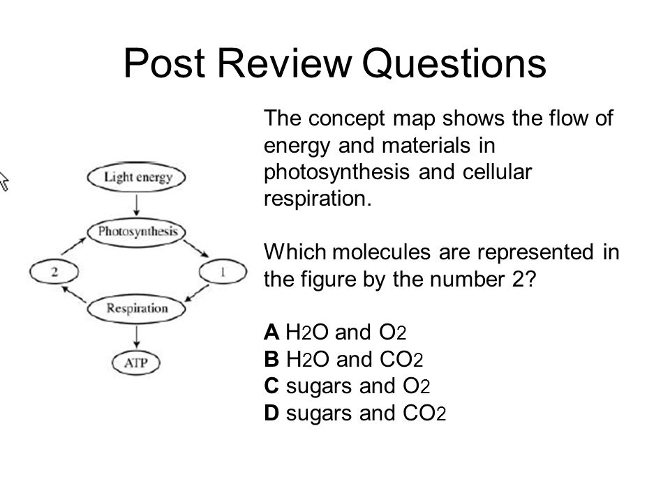 Post Review Questions The concept map shows the flow of energy and materials in photosynthesis and cellular respiration.