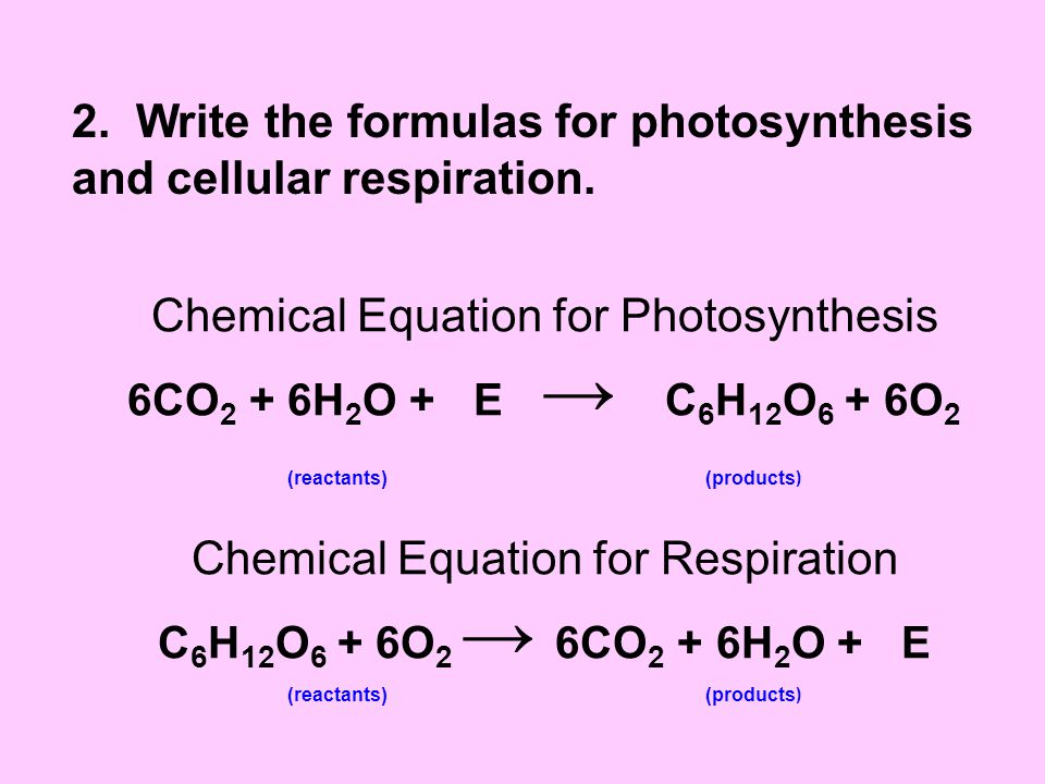 2. Write the formulas for photosynthesis and cellular respiration.