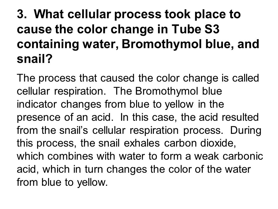3. What cellular process took place to cause the color change in Tube S3 containing water, Bromothymol blue, and snail