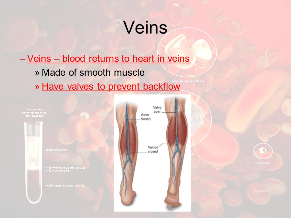 Veins Veins – blood returns to heart in veins Made of smooth muscle