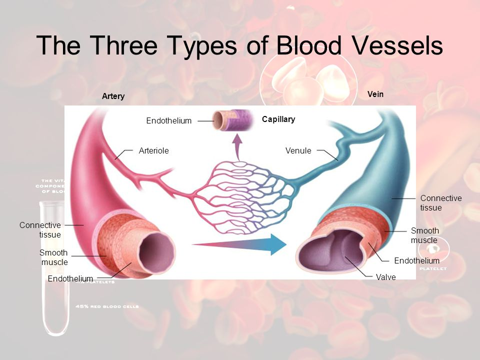 The Three Types of Blood Vessels
