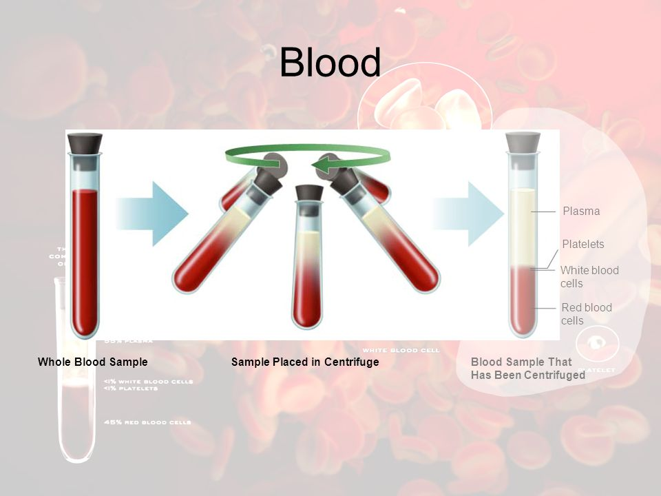 Blood Plasma Platelets White blood cells Red blood cells