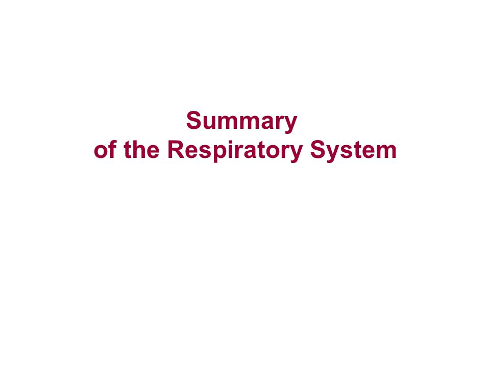 of the Respiratory System