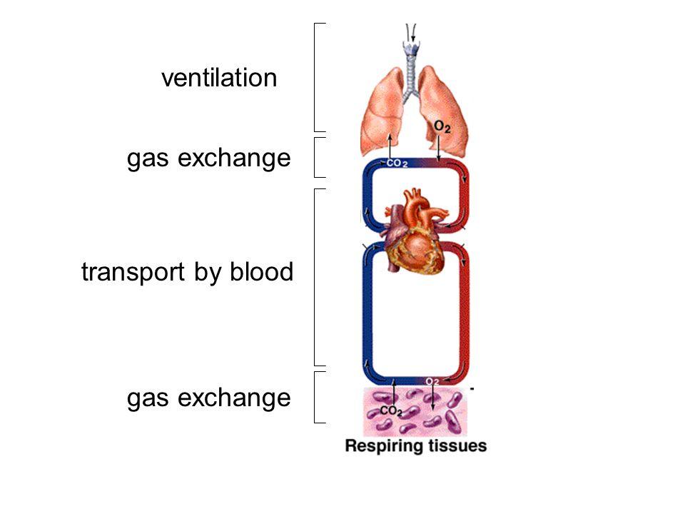 ventilation gas exchange transport by blood gas exchange