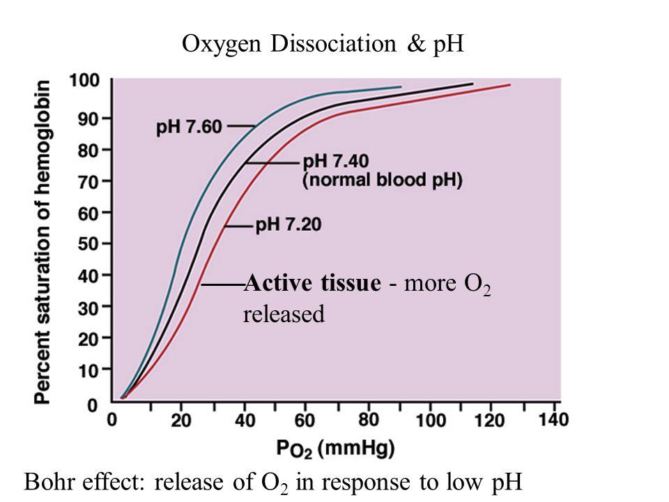 Oxygen Dissociation & pH