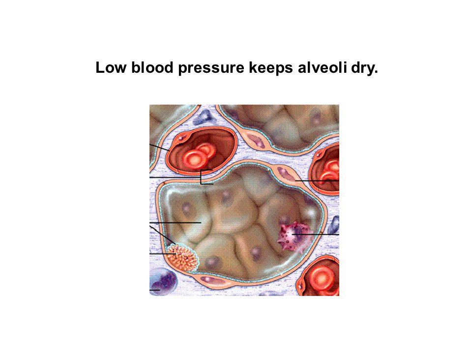 Low blood pressure keeps alveoli dry.