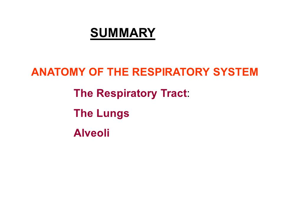 SUMMARY ANATOMY OF THE RESPIRATORY SYSTEM The Respiratory Tract: