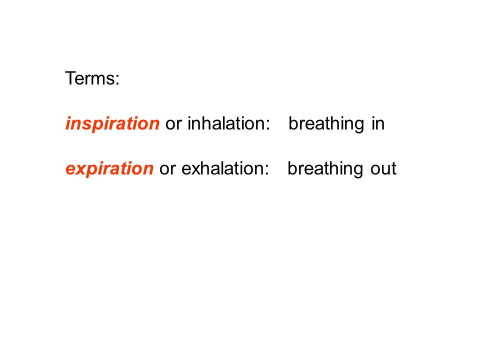 Terms: inspiration or inhalation: breathing in expiration or exhalation: breathing out