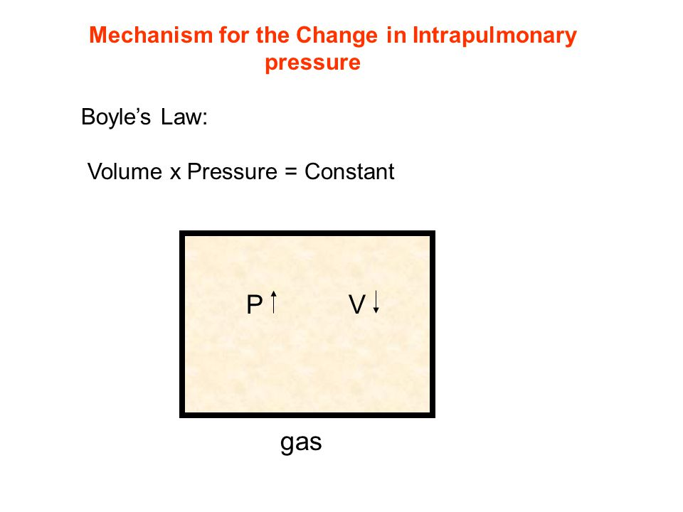Mechanism for the Change in Intrapulmonary pressure