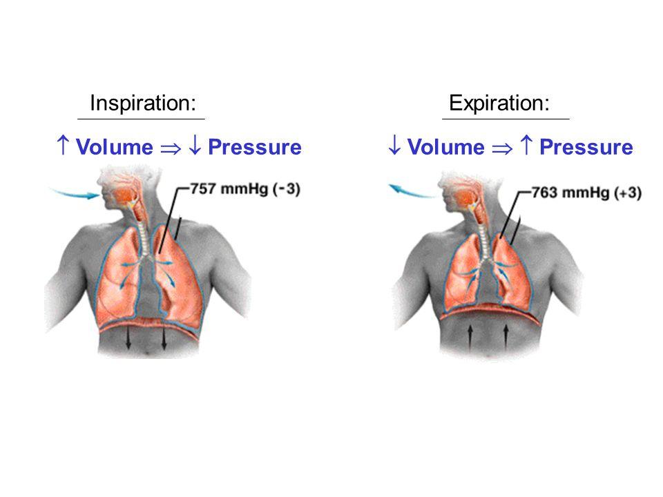 Inspiration: Expiration:  Volume   Pressure  Volume   Pressure
