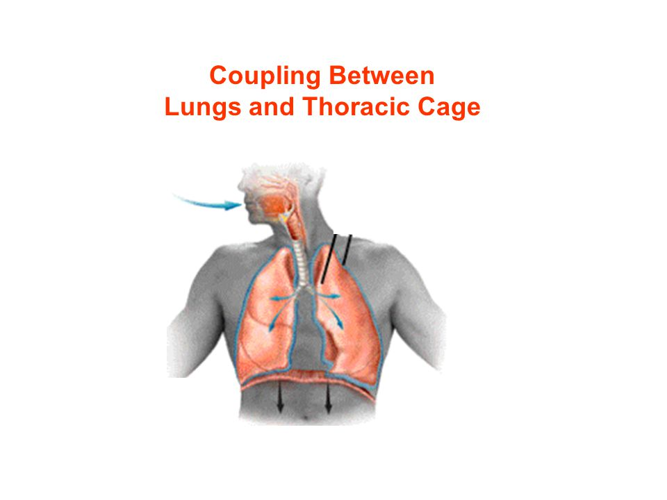 Lungs and Thoracic Cage