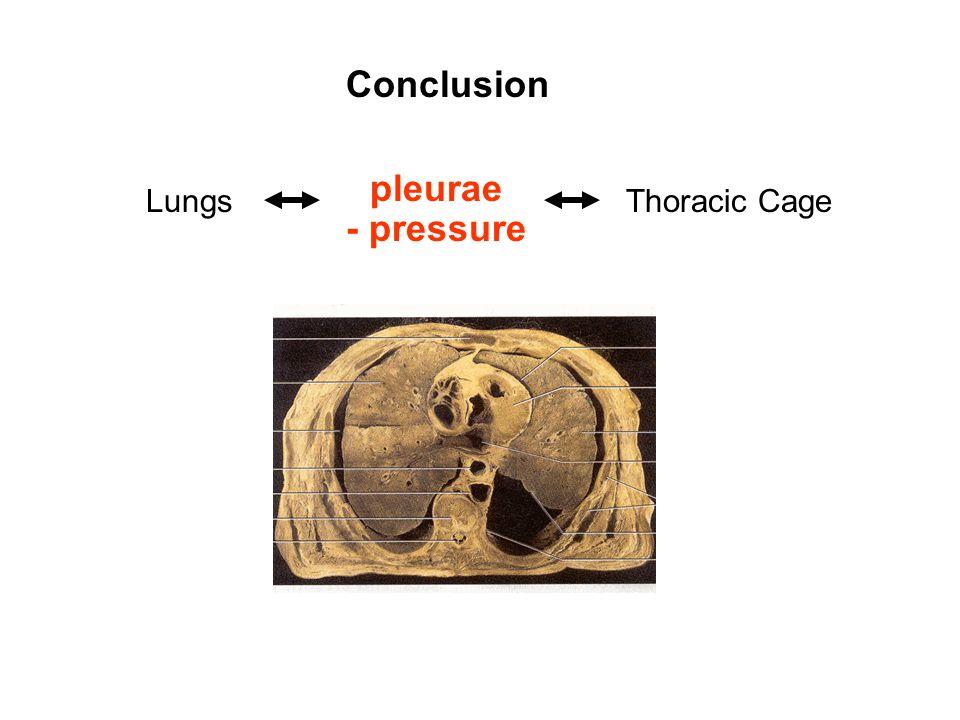 Conclusion pleurae Lungs Thoracic Cage - pressure