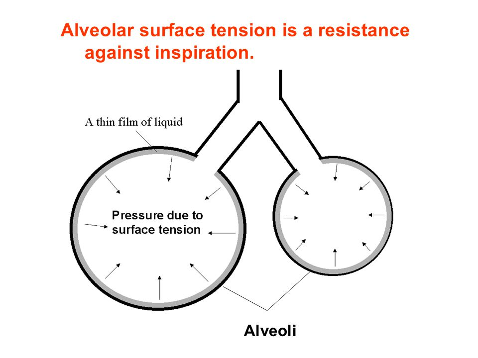 Alveolar surface tension is a resistance against inspiration.