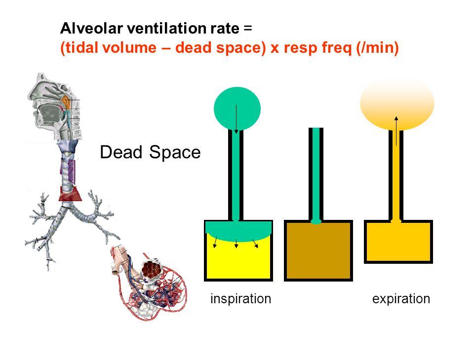 Dead Space Alveolar ventilation rate =