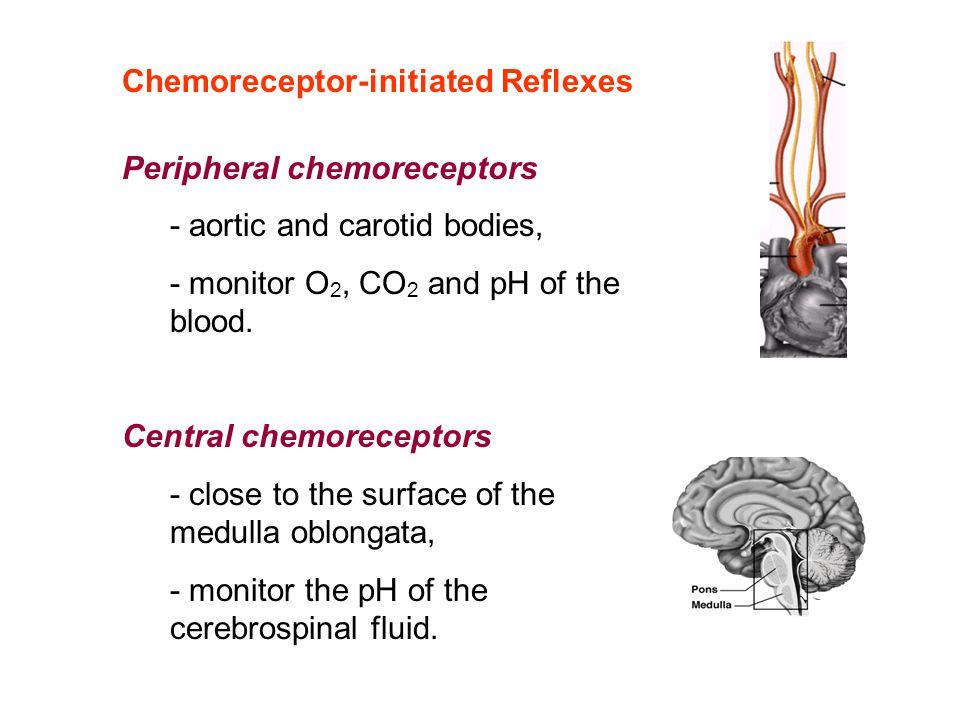 Chemoreceptor-initiated Reflexes