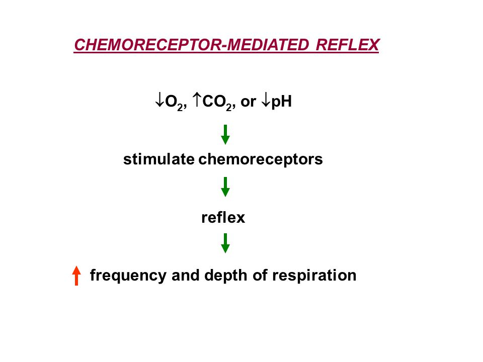 stimulate chemoreceptors frequency and depth of respiration
