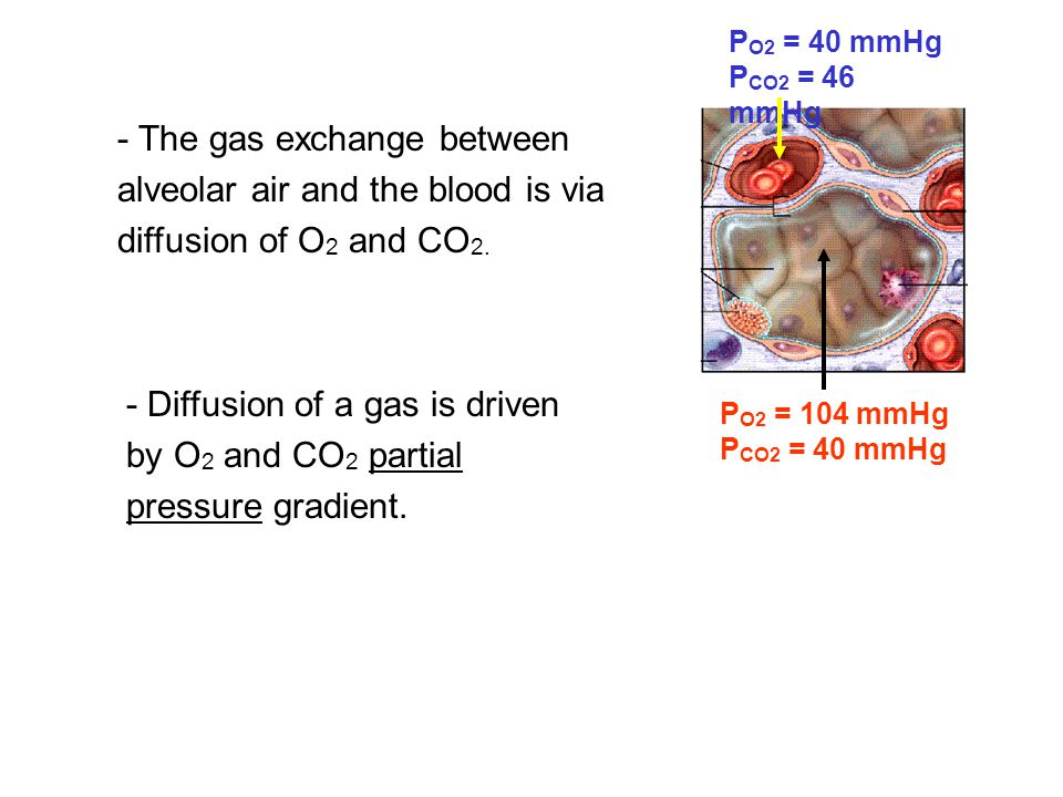 - Diffusion of a gas is driven by O2 and CO2 partial pressure gradient.