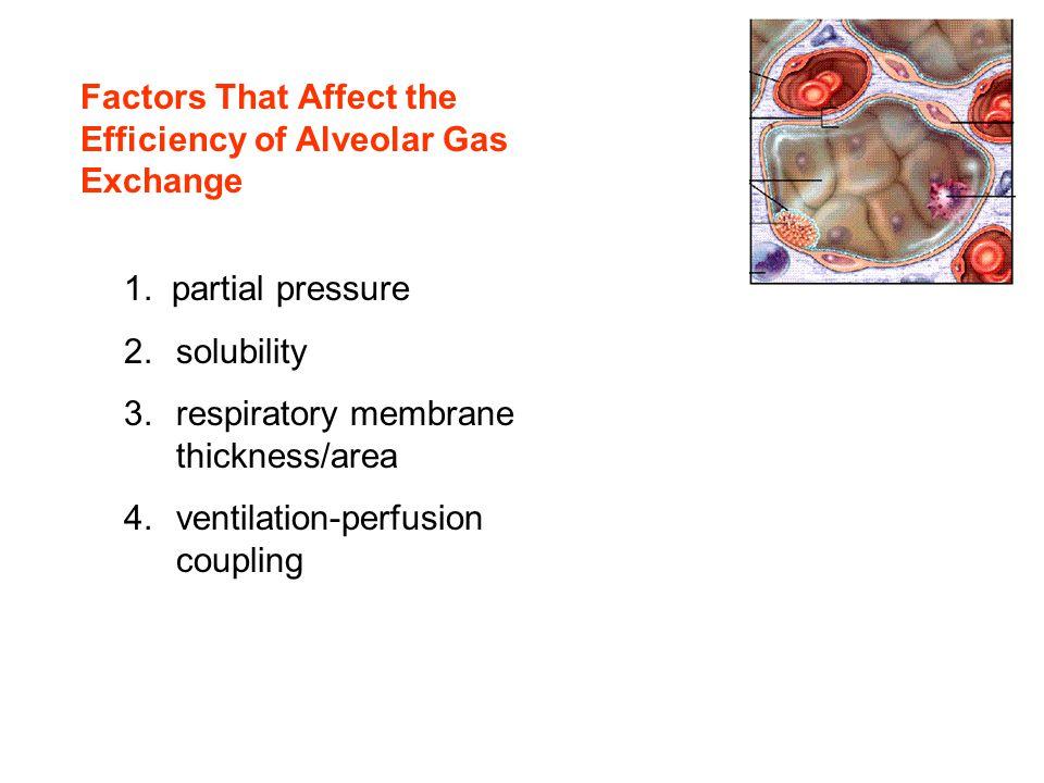 Factors That Affect the Efficiency of Alveolar Gas Exchange