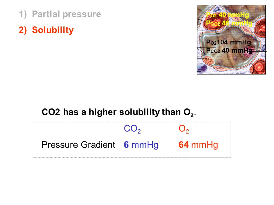 CO2 has a higher solubility than O2. CO2 O2